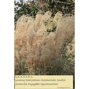 Grasses - Inspirational Sign - Darryn Silver